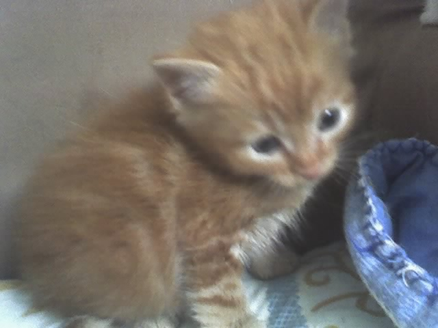 El hogar del gato gatitos de un mes - Gatitos de un mes ...