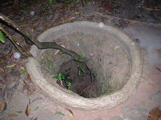 note que os tuneis subterraneos eram sempre feitos ao lado de uma arvore. Assim eles nao se fecham com chuva ou deslizamento de terra, e tambem oferece uma opcao da saida e ao mesmo tempo esconderijo atras das arvores