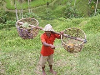 Agricultura (arroz) e turismo s�o as bases econ�micas de Bali