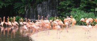 Photo: Singapore Bird Park