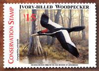 Ivory-billed Woodpecker Conservation Stamp