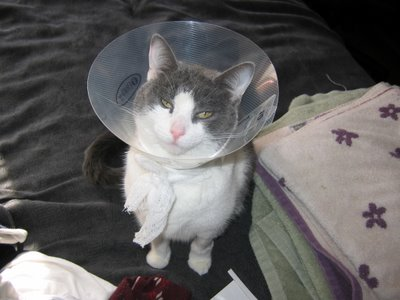 Señorita Space Cat, Gracie
