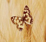 Umut bocegi vardı ya, öldü o... Simdi kelebek
