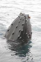 Richard Hyde 08/14/04 - www.oceanic-society.org