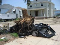 tree stump on car