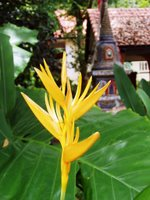 Flower at Wat Sapam