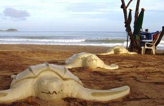 Turtles on Patong Beach