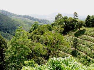 Green Season in Phuket