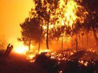 Espectacular imagen de un bosque en llamas. Foto La Voz de Galicia