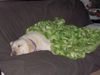 Sadie covered and sleeping