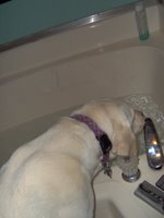 Sadie drinking bath water
