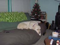 Sadie sleeping on the couch