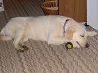 Sadie sleeping on her Duckie