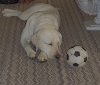 Sadie sleeping after soccer