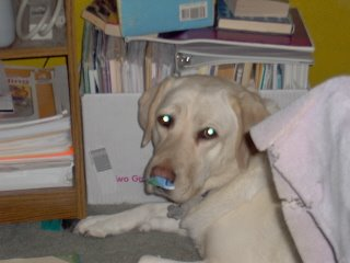 Sadie with a paper on her nose