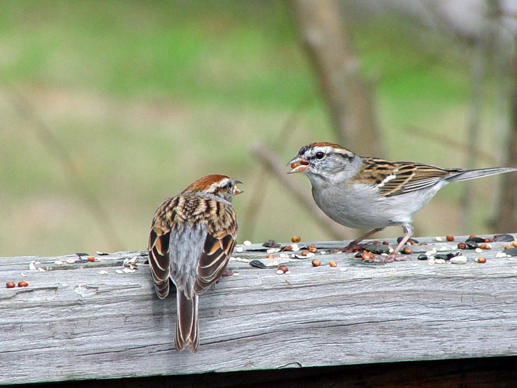 The Garden At Crocker Croft Feathered Friends House Sparrows