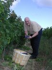 Peter May harvesting Ontario's very first Pinotage