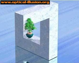 Flower Pot Illusion