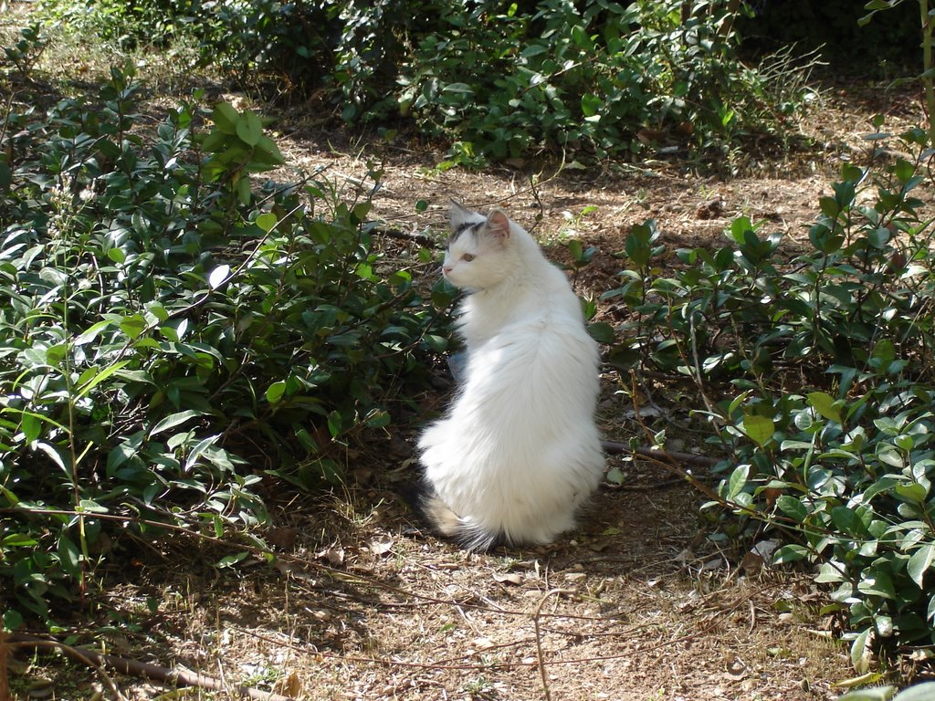 Cat Spaying Programs In Brittany France
