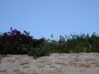 The stones of the Western Wall crowned with leaves and flowers