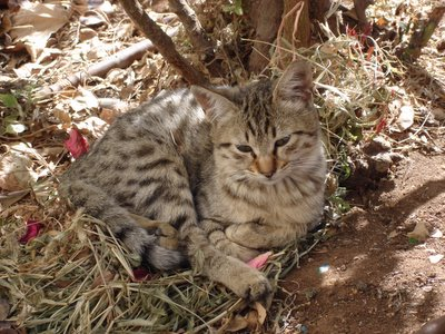 Kitten resting at feeding station