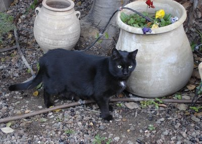 Black cat among the flowerpots