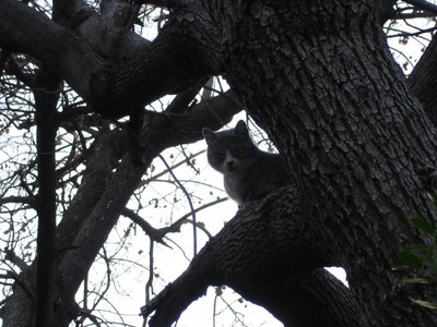 Cat resting in tree