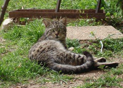 Tabby cat at feeding station