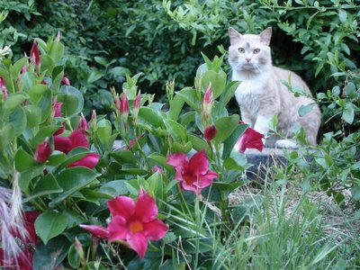 Flowers and kittycat