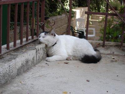 Fluffy rests