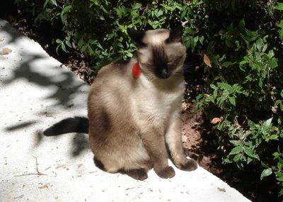 Coy kittycat