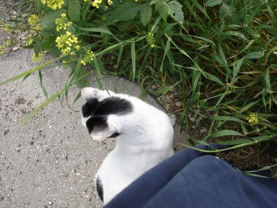 Cat emerging