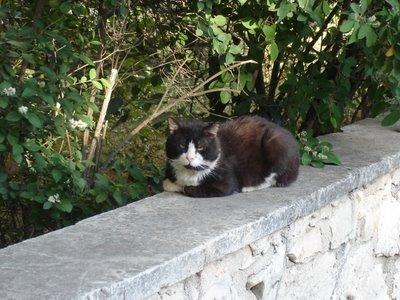 Tuxedo kittycat on a wall