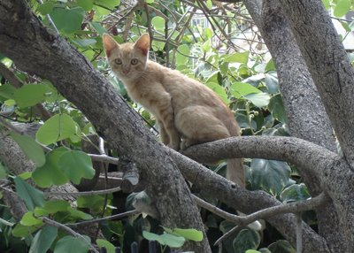 Young fellow in a tree