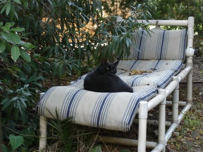 Lounging cat