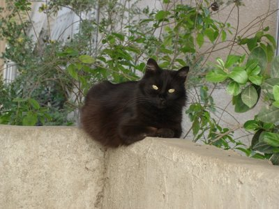 Black kittycat