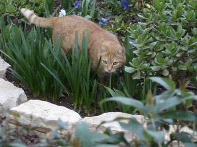 Mister Neighborcat prowls