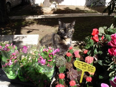 Lovely Rita, the florist&#8217;s cat