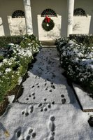 Running out to play in the snow, Barney and Miss Beazley leave a trail of footprints in the Rose Garden, Friday, Dec. 9, 2005. White House photo by Kimberlee Hewitt