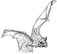 Test Your Batting Average, What do you know about bats? Bats are shy creatures.