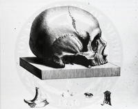Osteographica, or, The Anatomy of the Bones . . London: [1733?] Skull