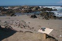 Tidepool Shore, NOAA, Monterey Bay National Marine Sanctuary