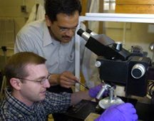Purdue's Brian D. Iverson, from left, a mechanical engineering doctoral student, and mechanical engineering professor Suresh Garimella use a microscope to examine a disk containing 'micro-pump' cooling devices small enough to fit on a computer chip. The tiny pumps circulate water through channels etched into the chip. The technology is an example of a microelectromechanical system, or MEMS, a tiny mechanical device fabricated using methods generally associated with microelectronics. Such innovative cooling systems will be needed for future computer chips because they will generate more heat, which could damage devices or hinder performance. (Purdue News Service photo/David Umberger)