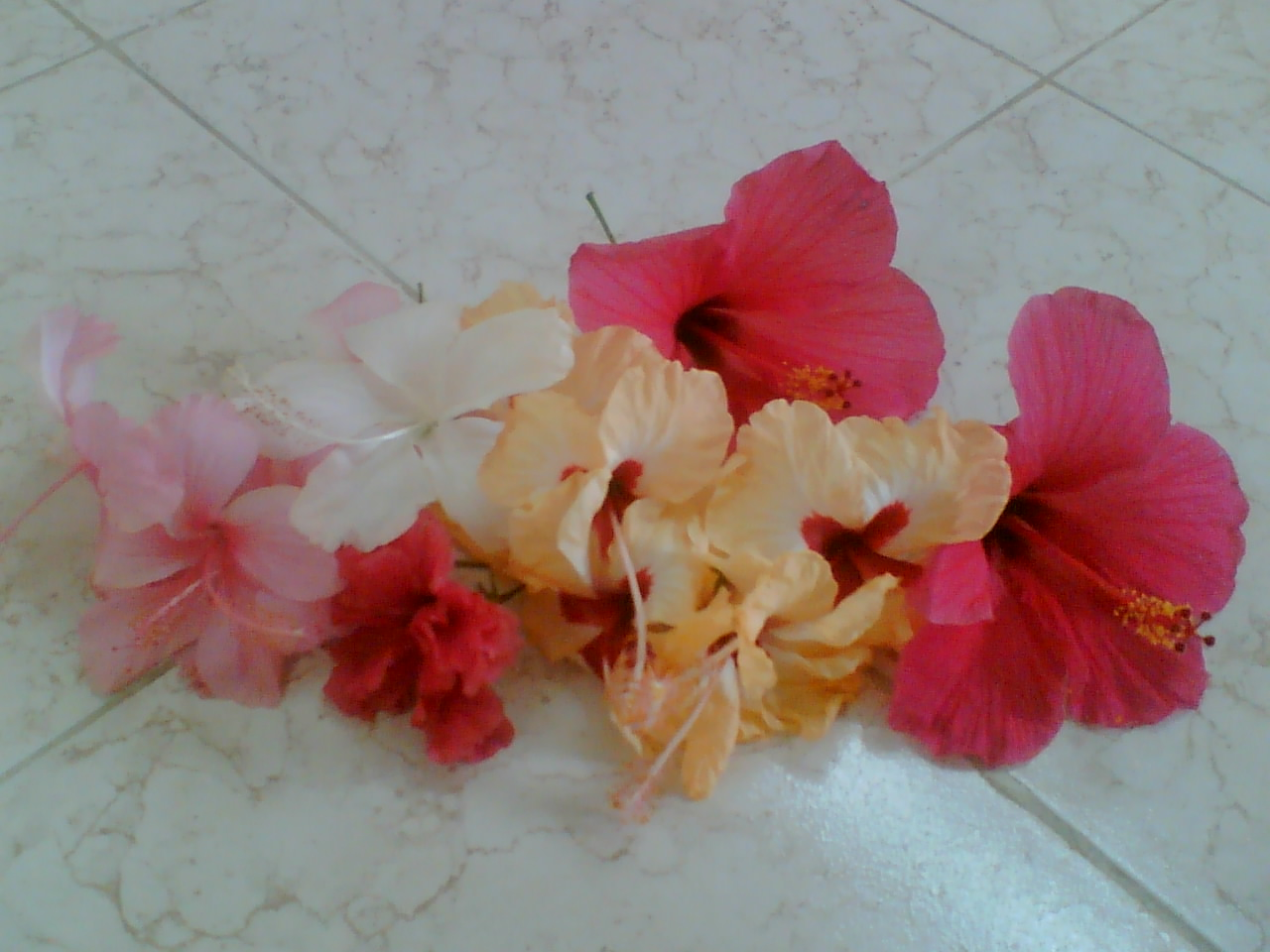 Its my life my world my personal blog describing my thoughts in beautiful flowers from my farm house izmirmasajfo