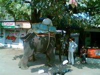 Begging Elephant!