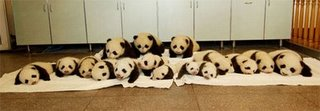 Panda Kindergarten Webcast