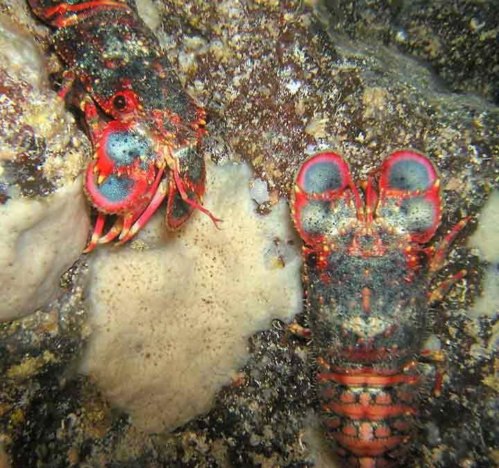 A Kona Hawaii Scuba Diver blabbers on: April 2006