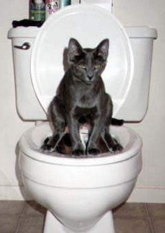 cat on toilet
