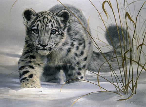 Le Snow Leopard Tor Best 2017