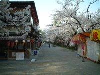 Hanami at Kenrokuen, Kanazawa